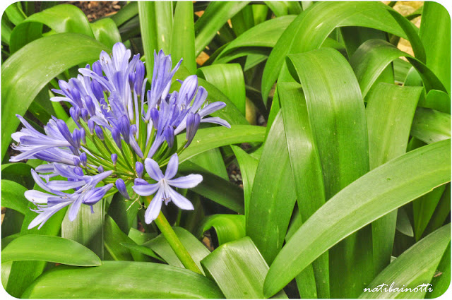 flores-bogota