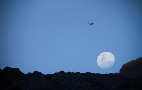 luna-trekking-cajon-maipo-chile