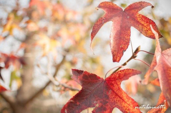hojas-otoño-nati-bainotti