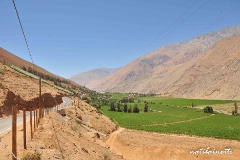Ruta por el valle cubierto de plantaciones, camino a las pisqueras.