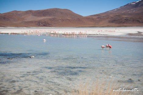 uyuni-lagunas-bolivia-mividanunamochila (17)