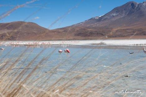 uyuni-lagunas-bolivia-mividanunamochila (18)