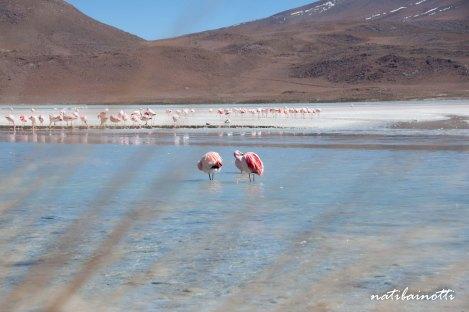 uyuni-lagunas-bolivia-mividanunamochila (19)