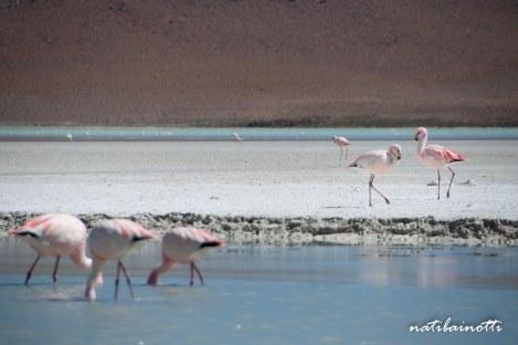 uyuni-lagunas-bolivia-mividanunamochila (21)