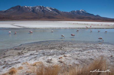 uyuni-lagunas-bolivia-mividanunamochila (22)