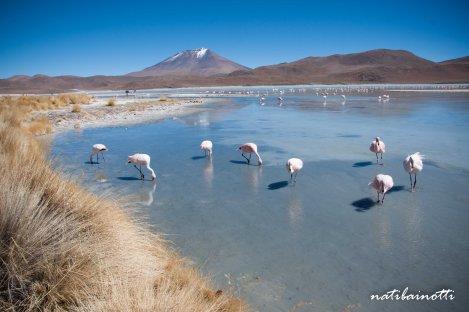 uyuni-lagunas-bolivia-mividanunamochila (26)