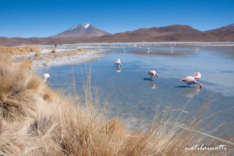 uyuni-lagunas-bolivia-mividanunamochila (28)