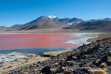 uyuni-lagunas-bolivia-mividanunamochila (42)