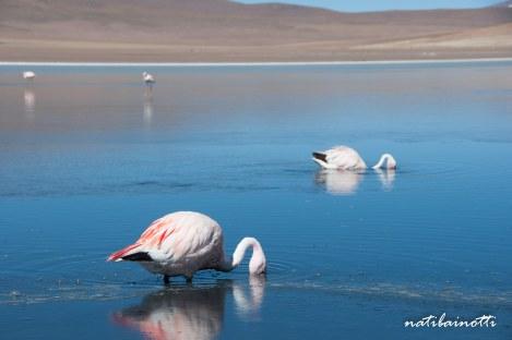uyuni-lagunas-bolivia-mividanunamochila (6)
