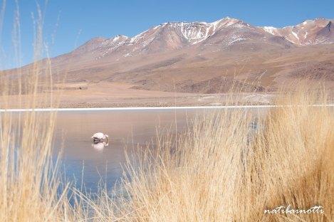 uyuni-lagunas-bolivia-mividanunamochila (7)