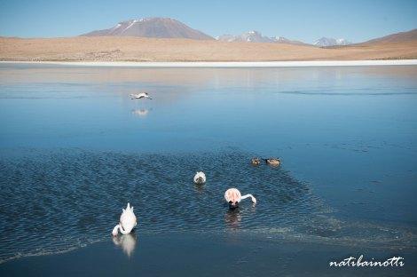 uyuni-lagunas-bolivia-mividanunamochila (9)