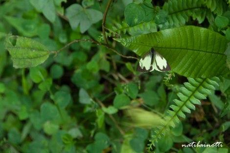 trekking-choro-bolivia-nati-bainotti-11