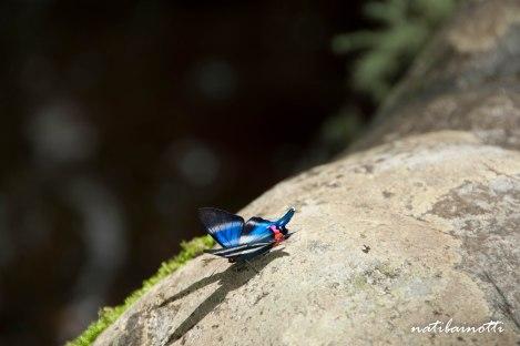 trekking-choro-bolivia-nati-bainotti-12