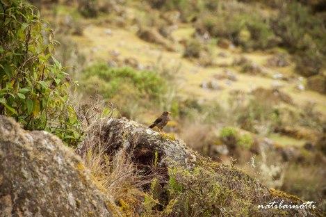 trekking-choro-bolivia-nati-bainotti (31)