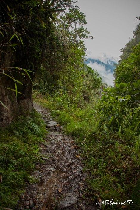 trekking-choro-bolivia-nati-bainotti (37)