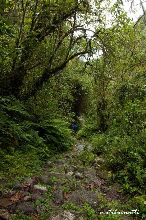 trekking-choro-bolivia-nati-bainotti (39)