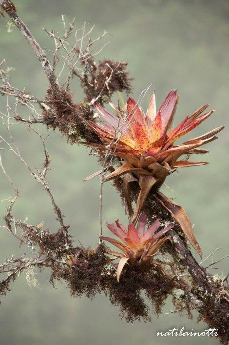 trekking-choro-bolivia-nati-bainotti (42)