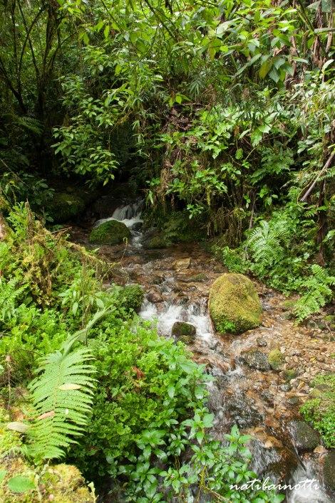 trekking-choro-bolivia-nati-bainotti (44)