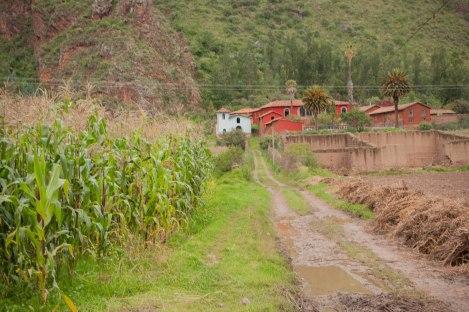 lamay-cusco-peru-nati-bainotti (6)