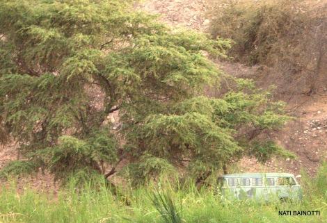 nazca-peru (12)