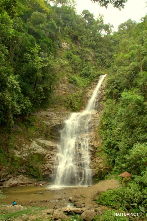 podocarpus-loja-ecuador (1)