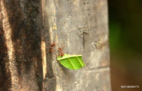 podocarpus-loja-ecuador (3)