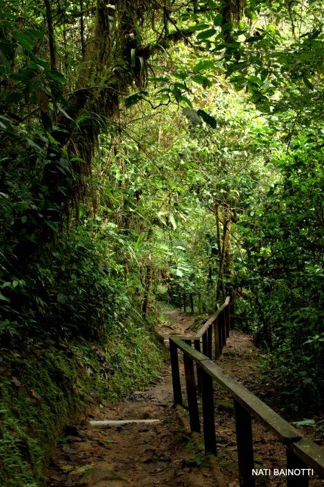 podocarpus-loja-ecuador (6)