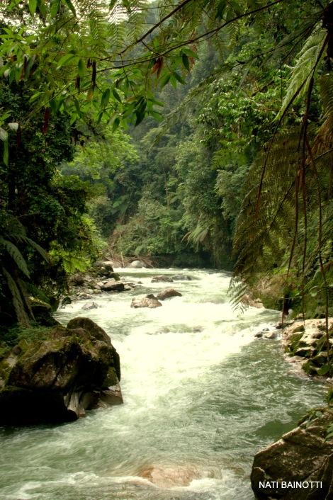 podocarpus-loja-ecuador (7)